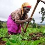 farmer images